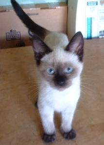 10/21/09 - This is Sookie, she is 12 weeks old and ready for adoption